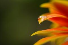 Gotas da água no musgo Imagem de Stock Royalty Free