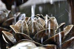 Gotas da água que caem em torno de uns lótus de pedra Fotografia de Stock