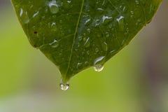 Gotas da chuva fotografia de stock royalty free