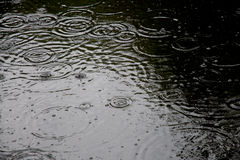 Gotas da chuva foto de stock