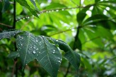 Gotas da chuva Fotos de Stock Royalty Free