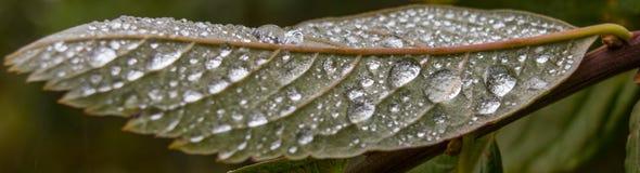 Gotas da chuva! Imagens de Stock Royalty Free