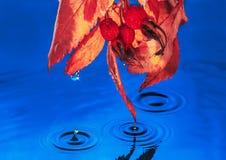 Gotas da chuva da planta de círculos da água do oceano Foto de Stock