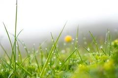 Gotas da chuva em gras Fotografia de Stock
