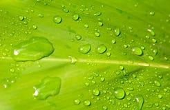 Gotas da chuva em uma folha Foto de Stock
