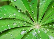 Gotas da chuva em uma folha verde Imagem de Stock