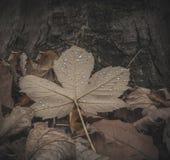 Gotas da chuva na folha Macro Fotos de Stock