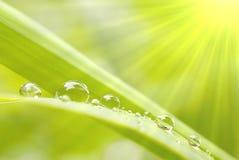 Gotas da chuva na grama no nascer do sol Imagem de Stock