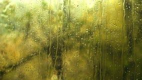 gotas da chuva na janela clara Gotas da chuva no vidro de janela fora a água do dia chuvoso pesado maravilhoso com céu nubla-se vídeos de arquivo