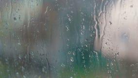 Gotas da chuva na tarde do vidro na primavera vídeos de arquivo
