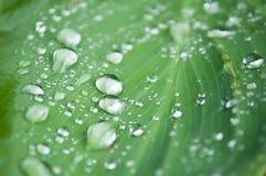 Gotas da chuva nas folhas Fotografia de Stock