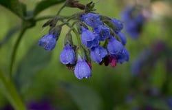 Gotas da chuva no azul Imagens de Stock