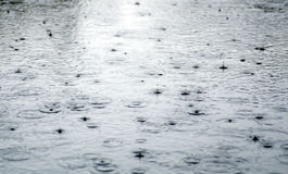 Gotas da chuva que rippling em uma poça. Foto de Stock