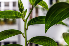 Gotas da chuva sobre uma planta Imagem de Stock