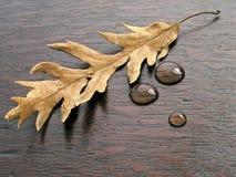 Gotas da folha e da água imagens de stock royalty free