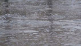 Gotas da queda da chuva ao pavimento que forma uma poça Lapso de tempo video estoque