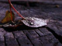 Gotas das folhas e da água de outono Imagens de Stock