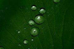 Gotas de água Imagens de Stock