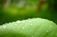 Gotas de água de brilho em uma folha verde Imagem de Stock Royalty Free