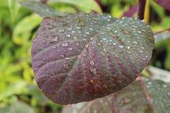 Gotas de água em uma folha Imagem de Stock