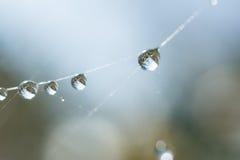 Gotas de água em uma Web de aranha Foto de Stock
