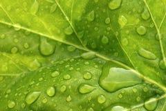 Gotas de água na folha Imagem de Stock