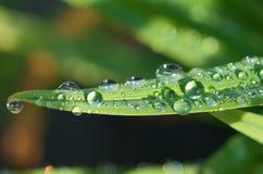 Gotas de água na folha imagem de stock royalty free