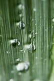 Gotas de água na grama Fotos de Stock Royalty Free