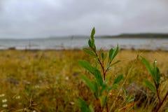 Gotas de água nas folhas em um dia chuvoso imagem de stock royalty free