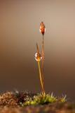 Gotas de água no musgo Fotografia de Stock Royalty Free