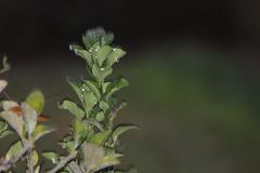 Gotas de água visíveis nas folhas verdes Fotografia de Stock