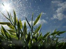 Gotas de agua e hierba Fotos de archivo