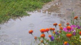 Gotas de agua en charco En plan removido las rebabas delantero empañó las flores