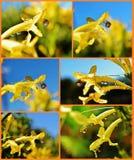 Gotas de agua en el flor Fotos de archivo