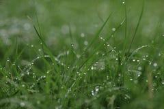Gotas de agua en hierba Imagenes de archivo