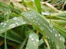 Gotas de agua en hierba Fotografía de archivo libre de regalías