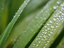 Gotas de agua en hierba Fotos de archivo