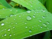 Gotas de agua en hierba verde Imagen de archivo libre de regalías