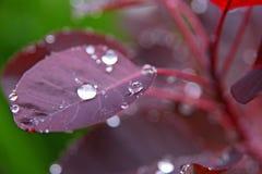 Gotas de agua en la hoja Fotografía de archivo libre de regalías