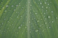 gotas de agua en la hoja Fotos de archivo