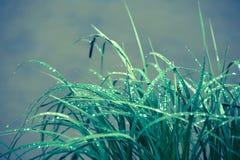 Gotas de agua en las cuchillas de la hierba Fotografía de archivo libre de regalías