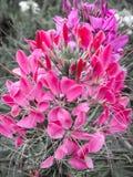 Gotas de agua en las flores Imagenes de archivo