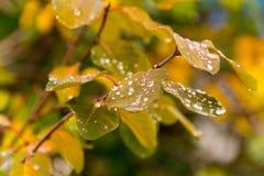 Gotas de agua en las hojas imagenes de archivo