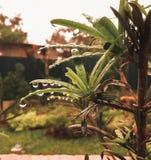 Gotas de agua en las hojas fotografía de archivo libre de regalías