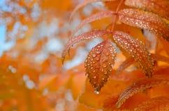 Gotas de agua en las hojas Imágenes de archivo libres de regalías