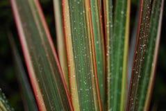 Gotas de agua en las hojas   Fotografía de archivo