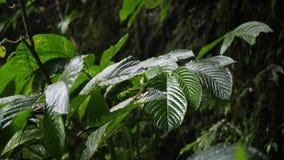 Gotas de agua que caen en la hoja verde durante la lluvia tropical pesada de la selva cantidad natural a cámara lenta 4K Bali, In almacen de video