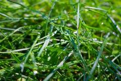 Gotas de agua solares en la hierba Fotos de archivo libres de regalías