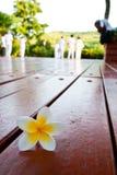 gotas de la flor en el suelo de madera Fotografía de archivo libre de regalías