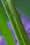 Gotas de la hierba y de la lluvia Fotos de archivo